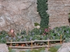 The Gardener Monk